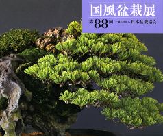 88th Kokufu Bonsai Exhibition Album