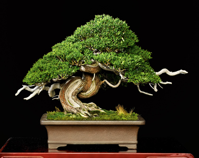 how to use bonsai js